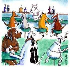 dogs in a bar