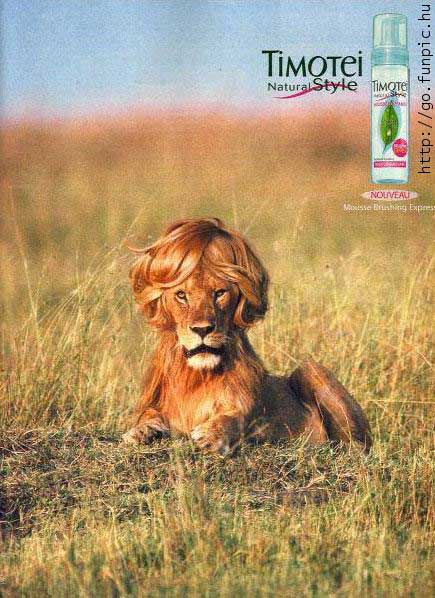 timotei lion with wig on