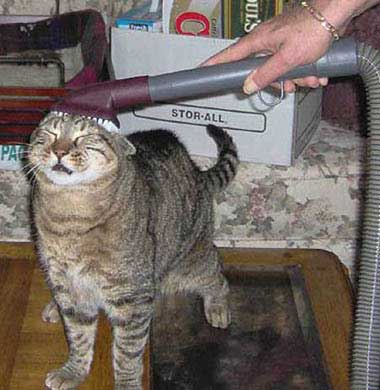 cat having a hoover